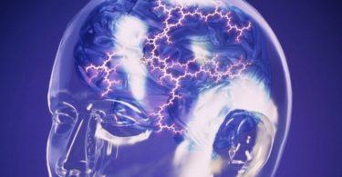 _93024860_brain